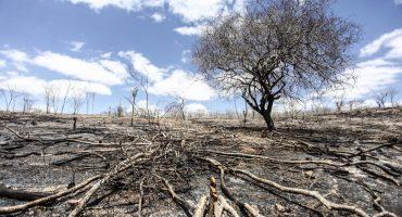 Cenas de desmatamento no interior de Alagoas — Foto: Jonathan Lins/FPI do São Francisco